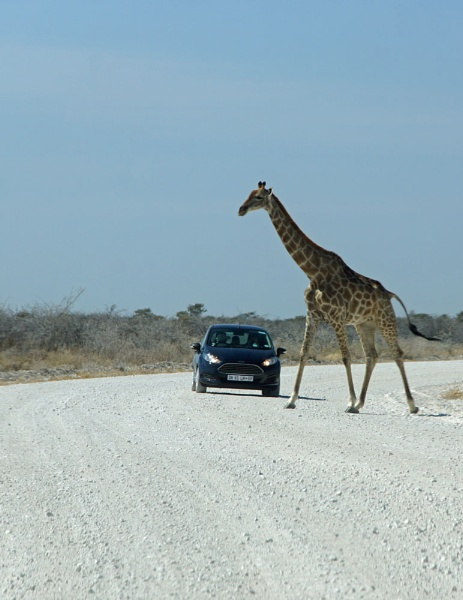 Right of Way by jinstone