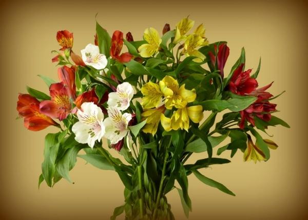 Glorious Lillies