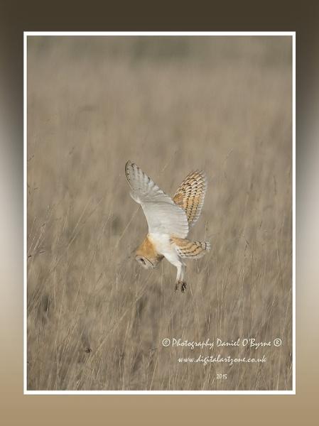 On the Hunt by danob