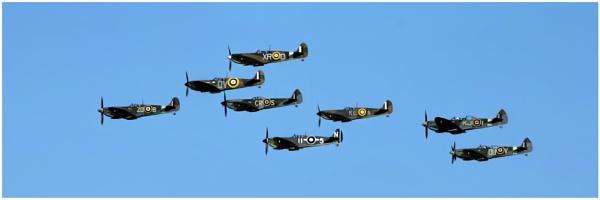 Spitfires by malleader