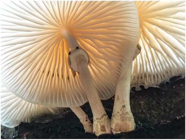 Translucent Porcelain by Terry L