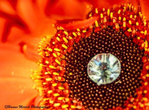 Wedding bouquet gerbera by HannesM