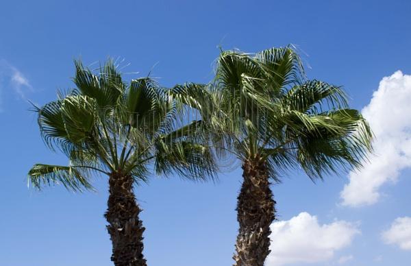 Ayia Napa palm trees. by elliemoo