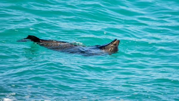 Ocean Seal by Ayoob