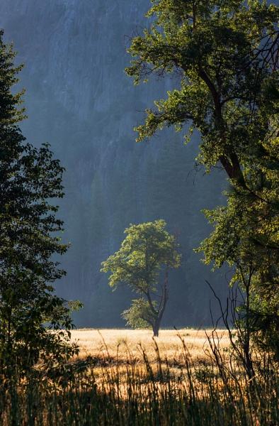 Morning light by Trevhas