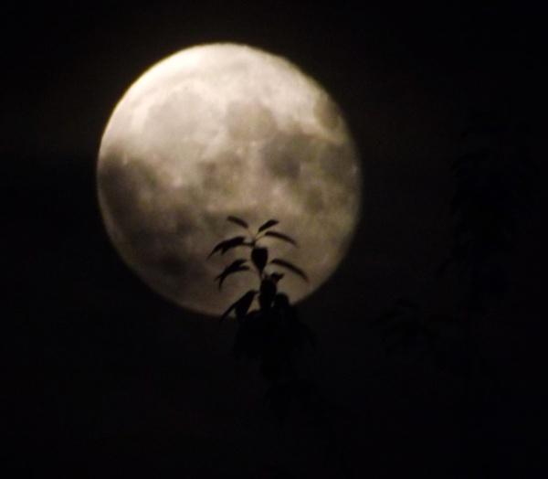 full Moon 29 September 2015 by ZoeKemp