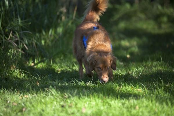 "\""I\'m walking the dog\"" by kuipje"