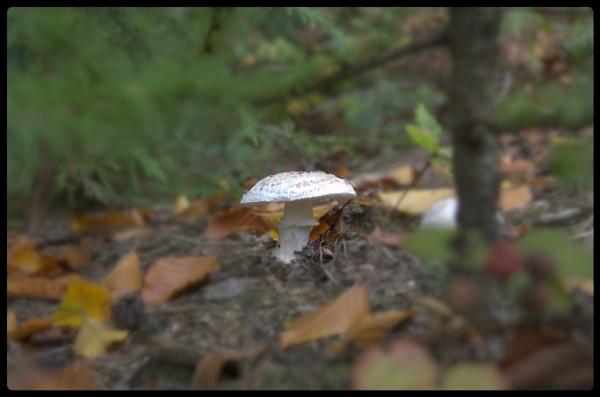 little mushroom by jrphotography