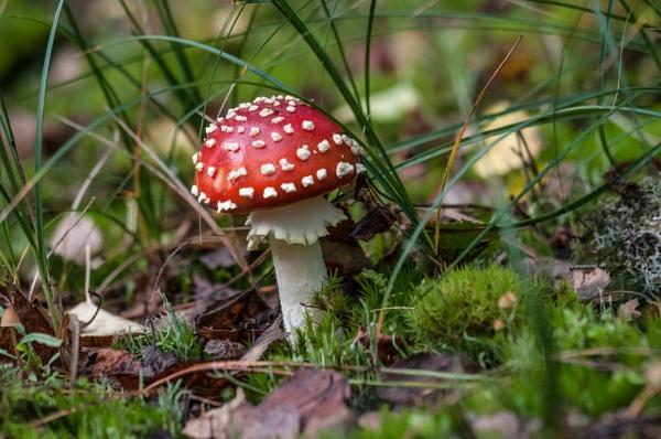 fungus by madbob