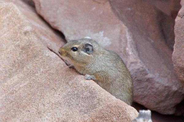 Ground Squirrel by jinstone