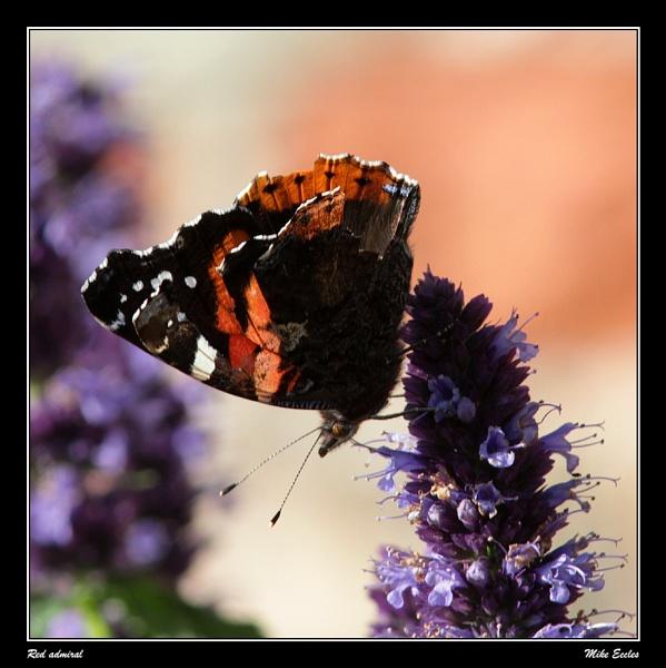 Wynyard butterflies by oldgreyheron