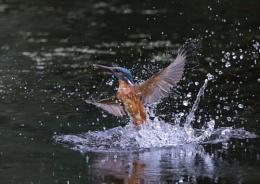 Ryemead Kingfishers