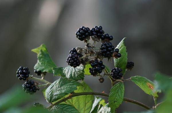 Autumn Fruitfulness by Silverzone