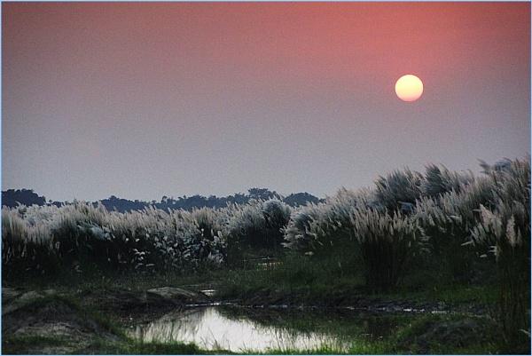 Sun set over sacharum by prabhusinha