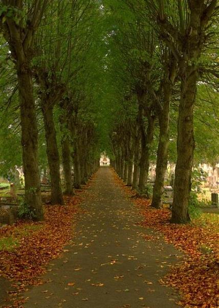 Autumn Avenue by andybebbs