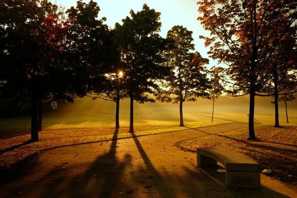 Telford Town Park by optik