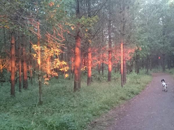 Autumn sunrise in the woods by matta56