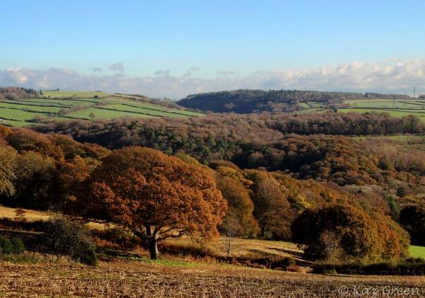 Autumn Trees by kaz1