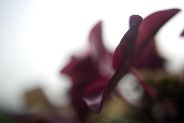 Bokeh Flower by dudders82