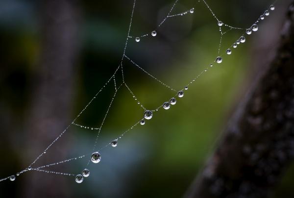 Pearls of water by GoranStamenkovic