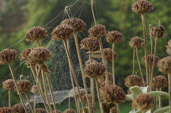 Sage web by paulb2433