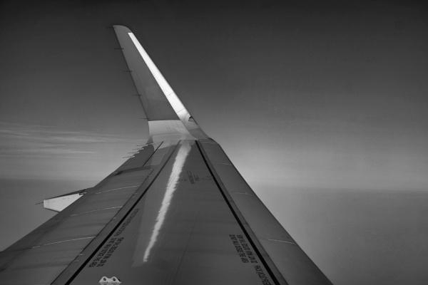 Wing by Split
