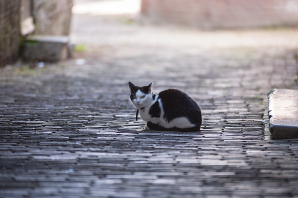 Middelburg All creatures, big or small by kuipje
