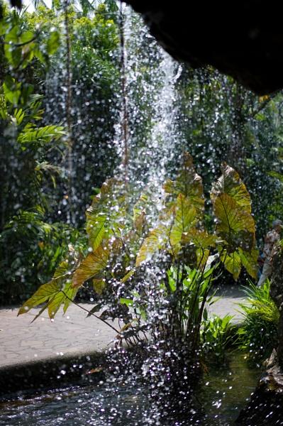Ginger Garden Waterfall