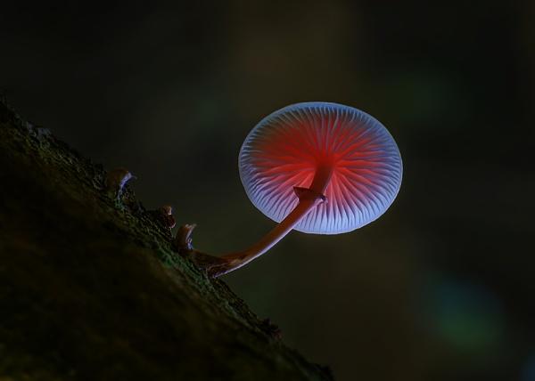 Under my umbrella by brzydki_pijak