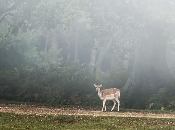 Autumn Mist by jasonrwl