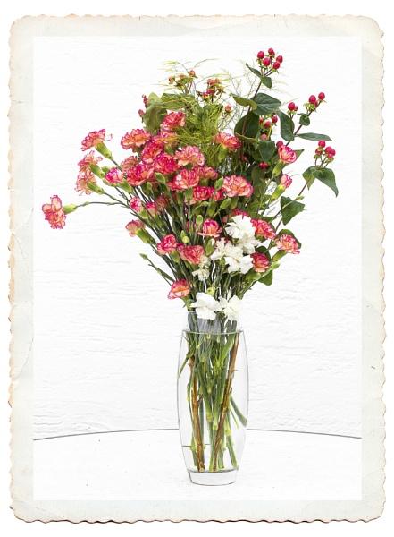 Carnations & Berries by Irishkate