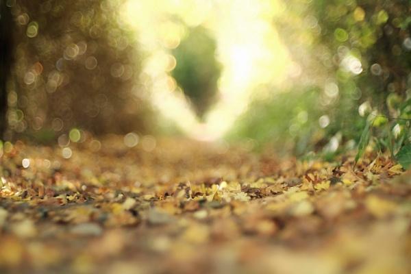 Autumn Bokeh by AlexandraSD