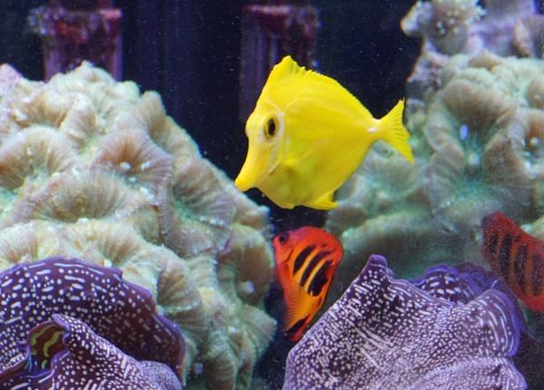 Fishy Yellow by tonyguitar