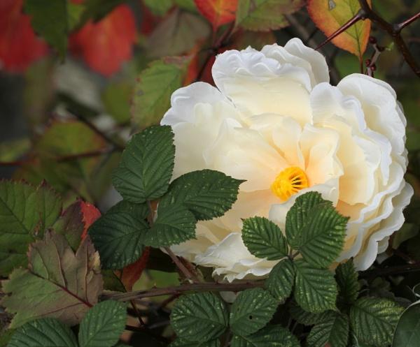 Bloom  Fraud by tonyguitar