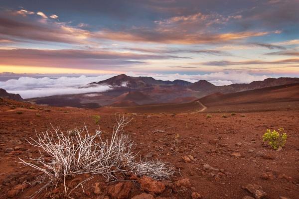 Barren Splendour by Trevhas