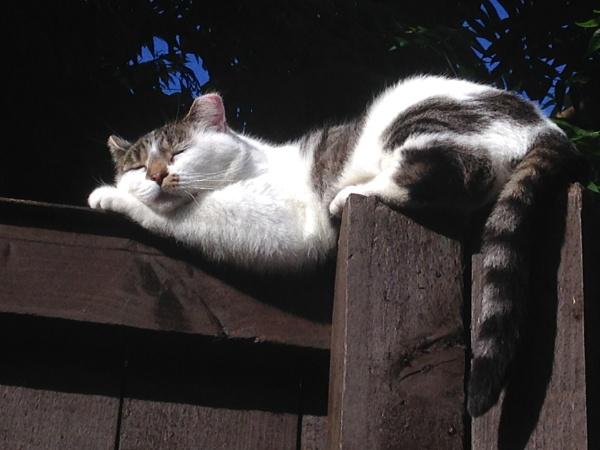 Cats really do sleep anywhere... by ChunkyButFunky