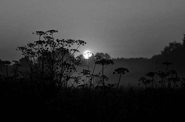 Silence by faulknerstv