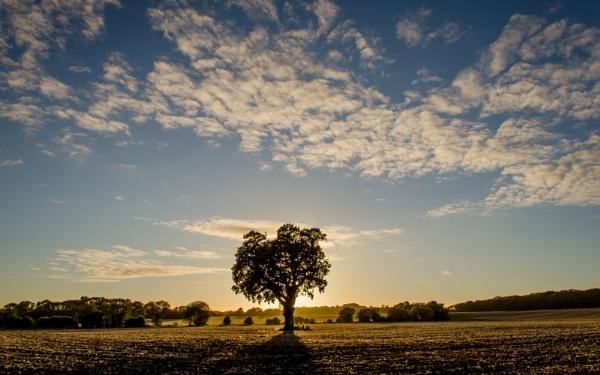 Oak Sunset by Dandrummer18