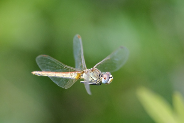 In flight. by alcontu
