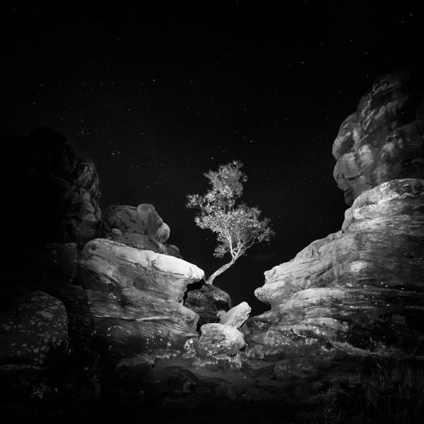 Night Tree by gerainte1