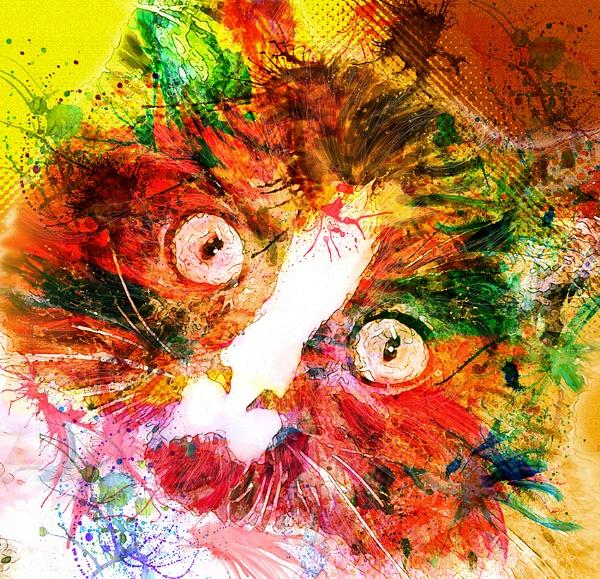 splat cat by iajacks