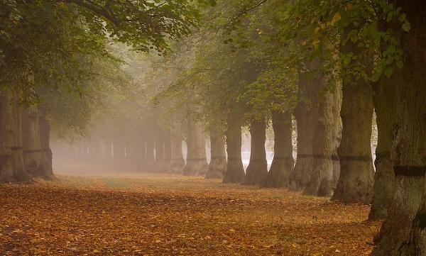 Treeline by martin.w