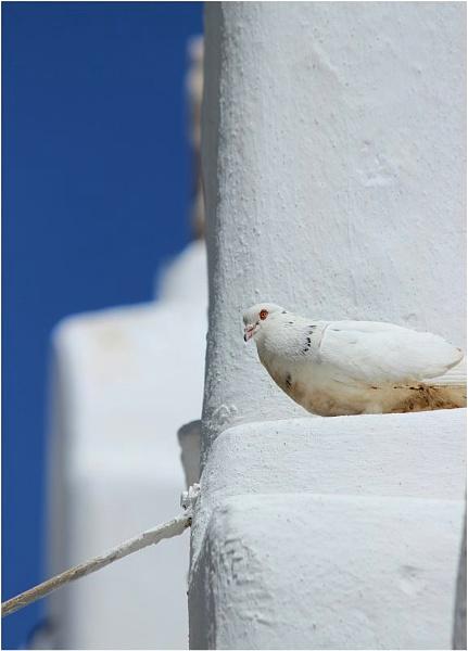 White On White by lifesnapper