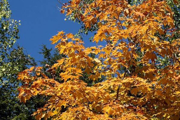 October Gold by Joline