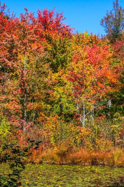 Autumn forest by SueLeonard