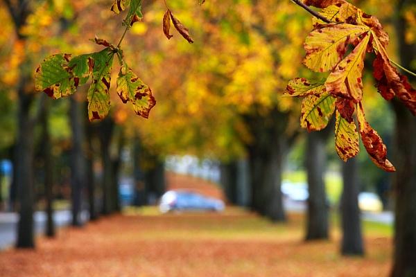 Autumn in Brum. by eyewhy