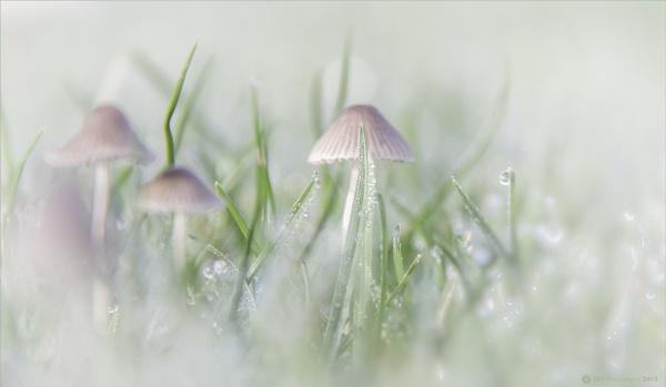 Teeny Weeny Mushrooms by Daisymaye