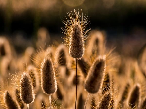 Grass heads by Dixxipix