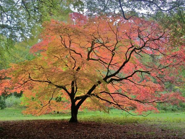Translucent Tree at Westonbirt Arboretum by BobThomas