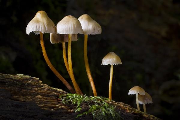 Woodland Fungi by sensorman